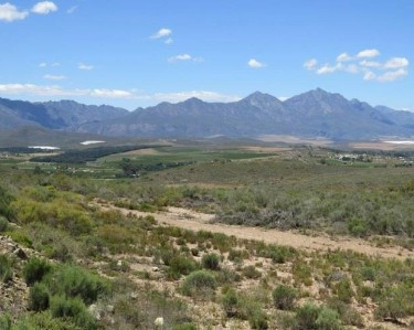 On Auction -  Smallholding On Auction in Bonnievale