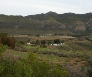 R 4,600,000 - 3 Bed Smallholding For Sale in Montagu