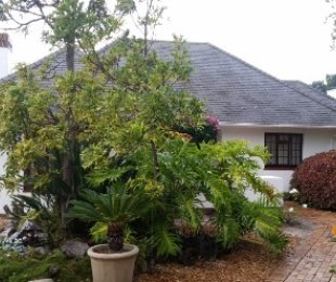 R 3,495,000 - 4 Bed House For Sale in Bergvliet