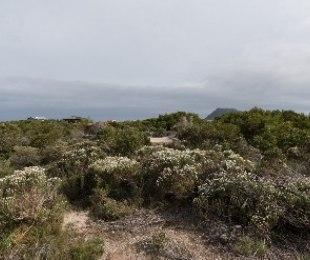 R 260,000 -  Plot For Sale in Betty's Bay