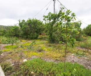 R 1,100,000 -  Land For Sale in Mossel Bay