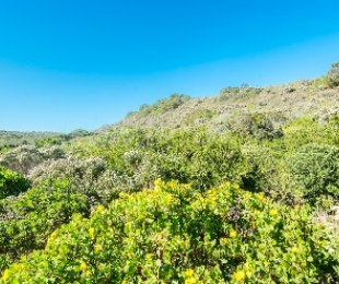 R 895,000 -  Plot For Sale in Cola Beach