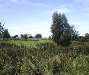 R 530,000 -  Land For Sale in Tsitsikamma