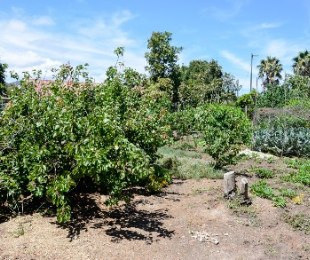R 1,000,000 -  Land For Sale in Denneoord