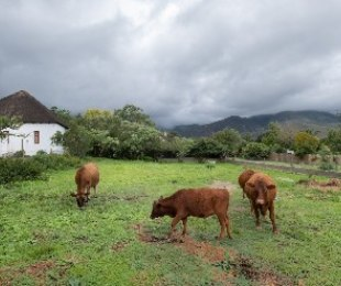R 975,000 -  Plot For Sale in Greyton