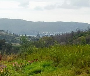 R 325,000 -  Plot For Sale in Green Pastures