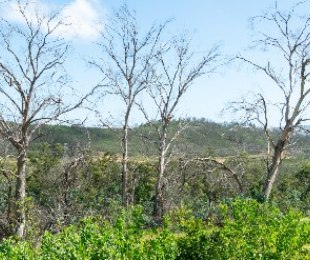 R 2,750,000 -  Land For Sale in Knysna